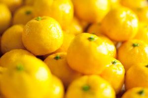 シュトーレン素材 柚子